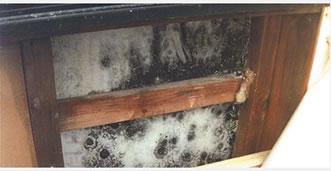 壁の内部に繁殖するカビ